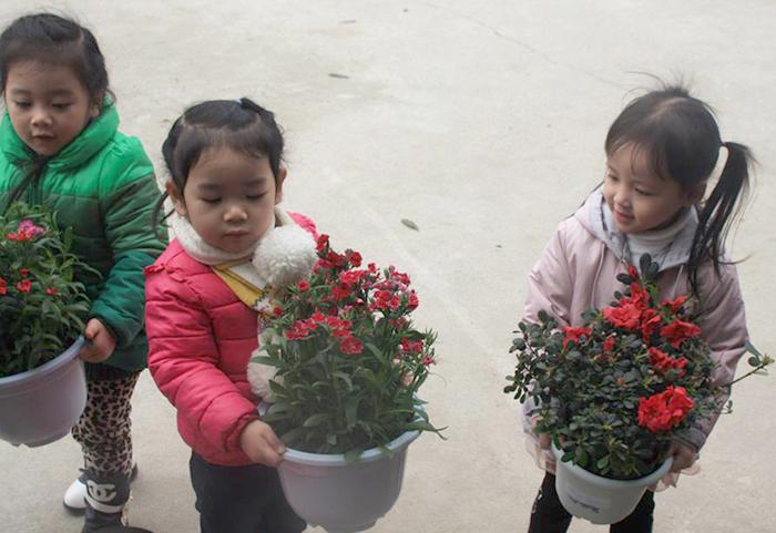Thông báo tết trồng cây